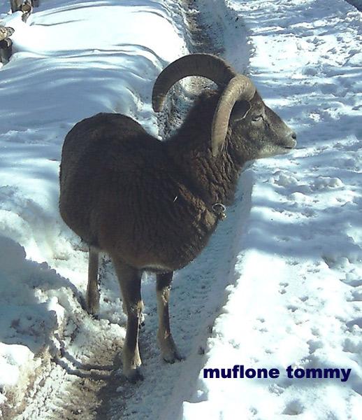 tommy-neve