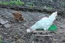 polli e coniglio